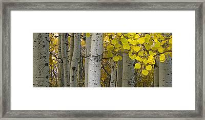 Aspen Panorama Framed Print