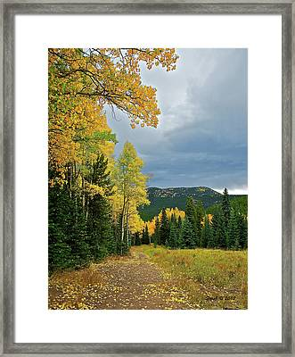 Aspen Pathway Framed Print by Stephen  Johnson