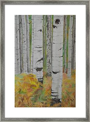 Aspens And Bracken Framed Print by Laurel Thomson