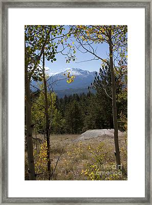 Framed Print featuring the photograph Aspens Around Pikes Peak by Marta Alfred