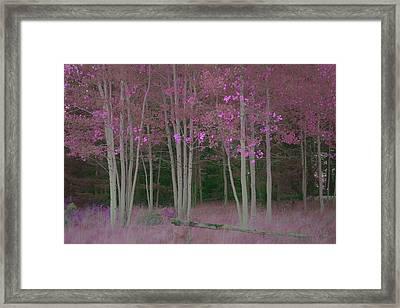 Aspens Framed Print by C Thomas Willard