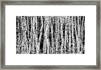 Framed Print featuring the photograph Aspens by Clare VanderVeen