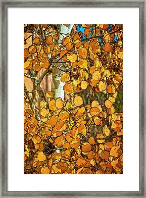 Aspens Gold Framed Print