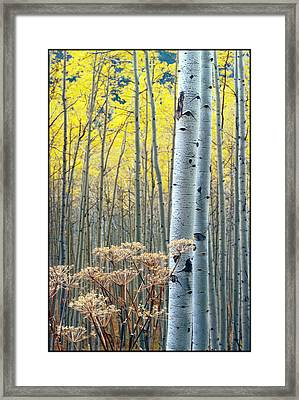 Aspens Independance Pass Framed Print by John McEvoy