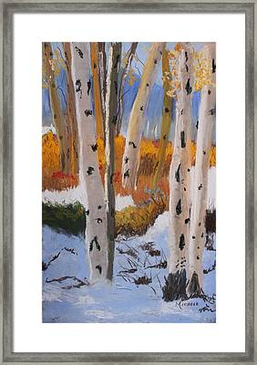 Aspens On Snowy Ground Framed Print by Michele Turney