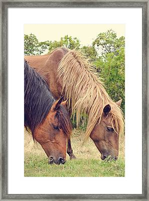 Assateague Ponies Framed Print