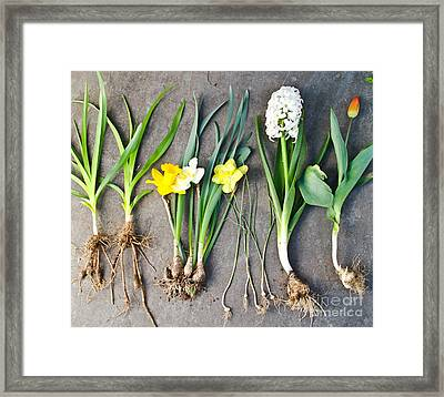 Assorted Spring Flowers Framed Print by Photo Researchers, Inc.