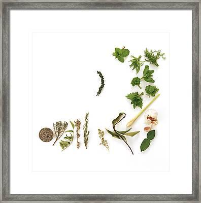 Assortment Of Herbs Framed Print