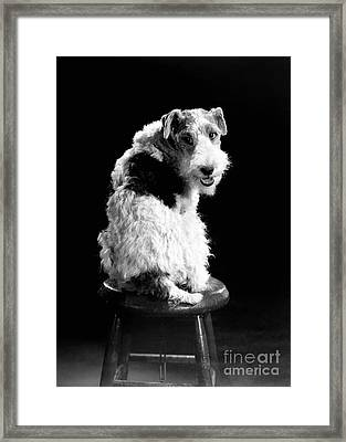 Asta Framed Print by Granger