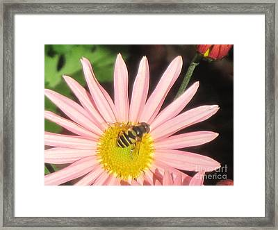 Asta With Bee Framed Print by Barbara Milhender
