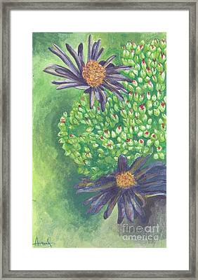 Aster Framed Print by Acqu Art