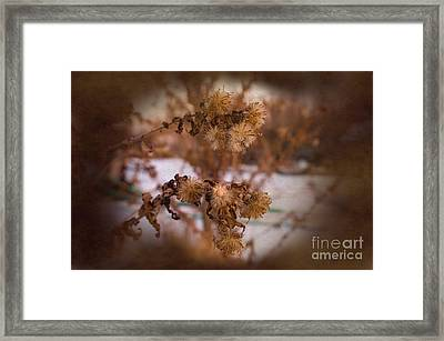 Asters Of March Framed Print by The Stone Age