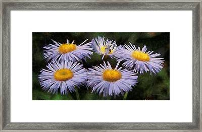 Asters Painterly Framed Print by Ernie Echols