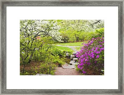 Asticou Azelea Garden In Spring Photograph Framed Print
