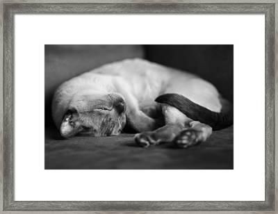 Astir Framed Print by Robin Konarz