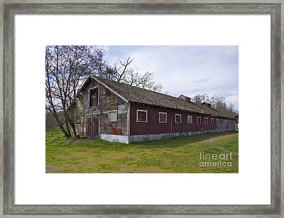 Asylum Chicken Coop Framed Print