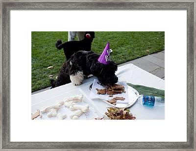 At A Birthday Celebration For The Bo Framed Print by Everett