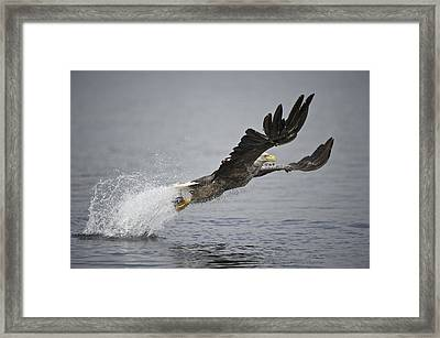 At Full Stretch Framed Print