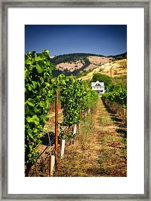 At Home On The Vineyard Framed Print by Vicki Jauron