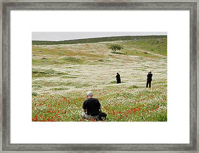 At Lachish's Magical Fields Framed Print