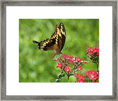 At The Flower Altar Framed Print