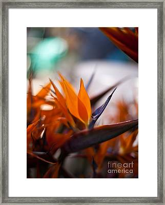 At The Flower Market Framed Print