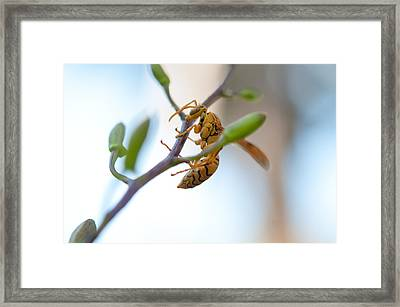 At Work. Busy Bee Framed Print