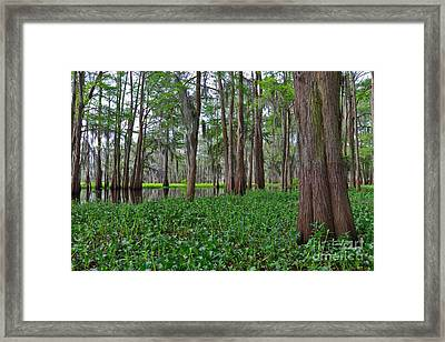 Atchafalaya Swamp Framed Print by Louise Heusinkveld