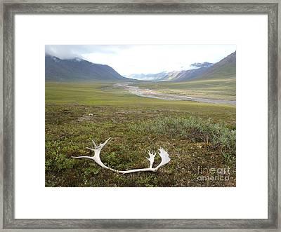 Atigun Valley Caribou Shed Framed Print by Adam Owen