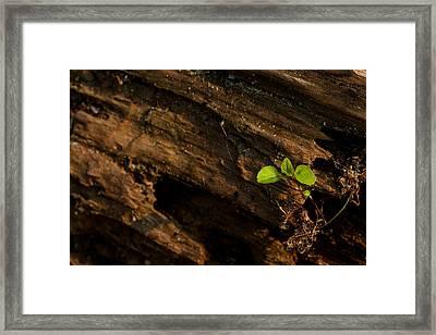 Atres 9 Framed Print by Karol Livote
