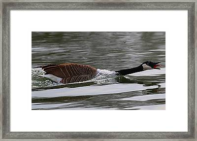 Framed Print featuring the photograph Attack Of The Canadian Geese by Elizabeth Winter