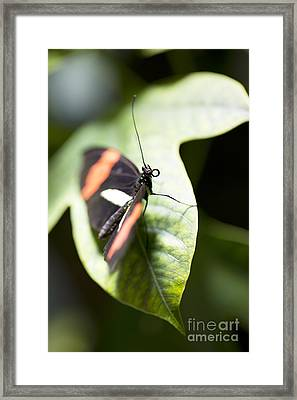 Framed Print featuring the photograph Attention by Leslie Leda