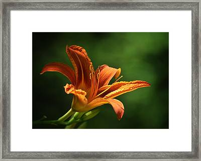 Auburn Framed Print by Rebecca Sherman