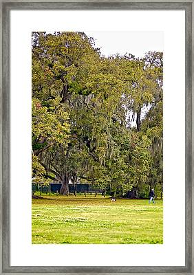 Audubon Park 2 Framed Print by Steve Harrington