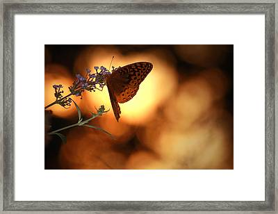 August Evening Framed Print by Kathryn Mayhue