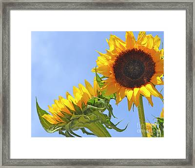 August Sunshine Framed Print