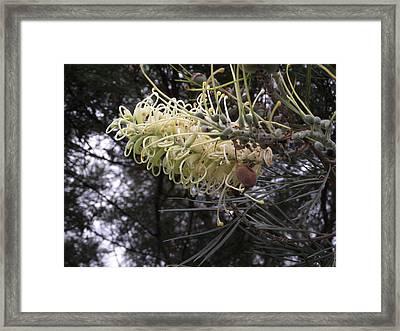 Australian Beauty-1 Framed Print by Rani De Leeuw