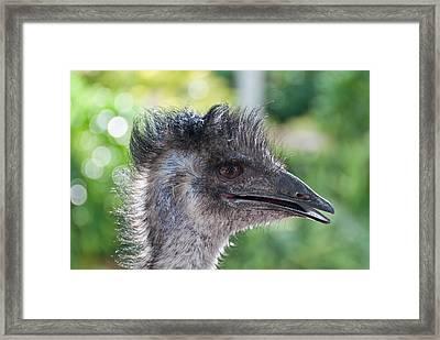 Australian Bird Framed Print by Linda Pulvermacher
