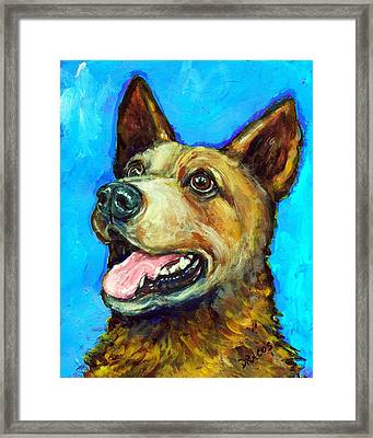 Australian Cattle Dog   Red Heeler  On Blue Framed Print by Dottie Dracos