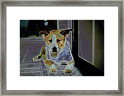 Australian Cattle Dog Boxer Mix Framed Print by One Rude Dawg Orcutt
