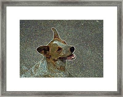 Australian Cattle Dog Mix Framed Print by One Rude Dawg Orcutt