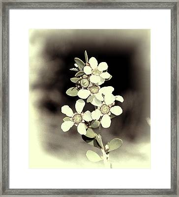 Australian Coastal Wildflowers Framed Print