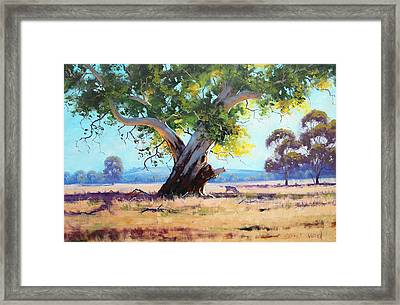 Australian Red Gum Framed Print