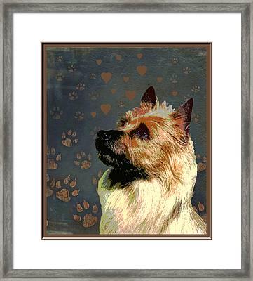 Australian Terrier Framed Print by One Rude Dawg Orcutt