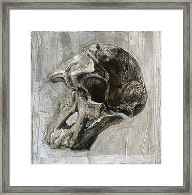 Australopithecus Africanus Skull Framed Print by Kennis And Kennismsf