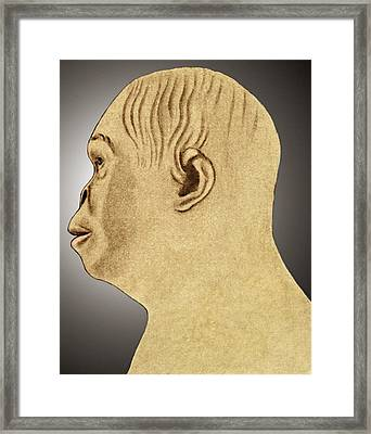 Australopithecus Reconstruction Framed Print by Sheila Terry
