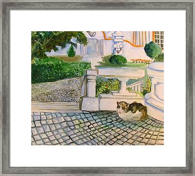 Austrian Cat Framed Print by Mindy Newman