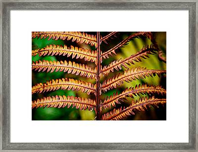 Autmn Fern Framed Print