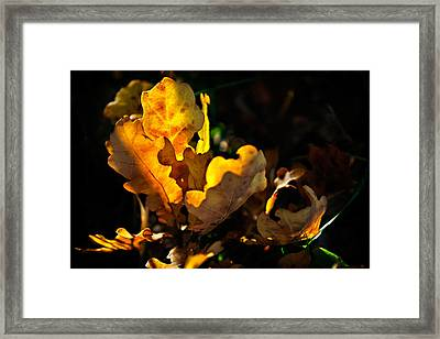 Autmn Leaf Framed Print