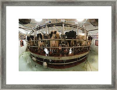 Automatic Milking Machine Framed Print by Photostock-israel